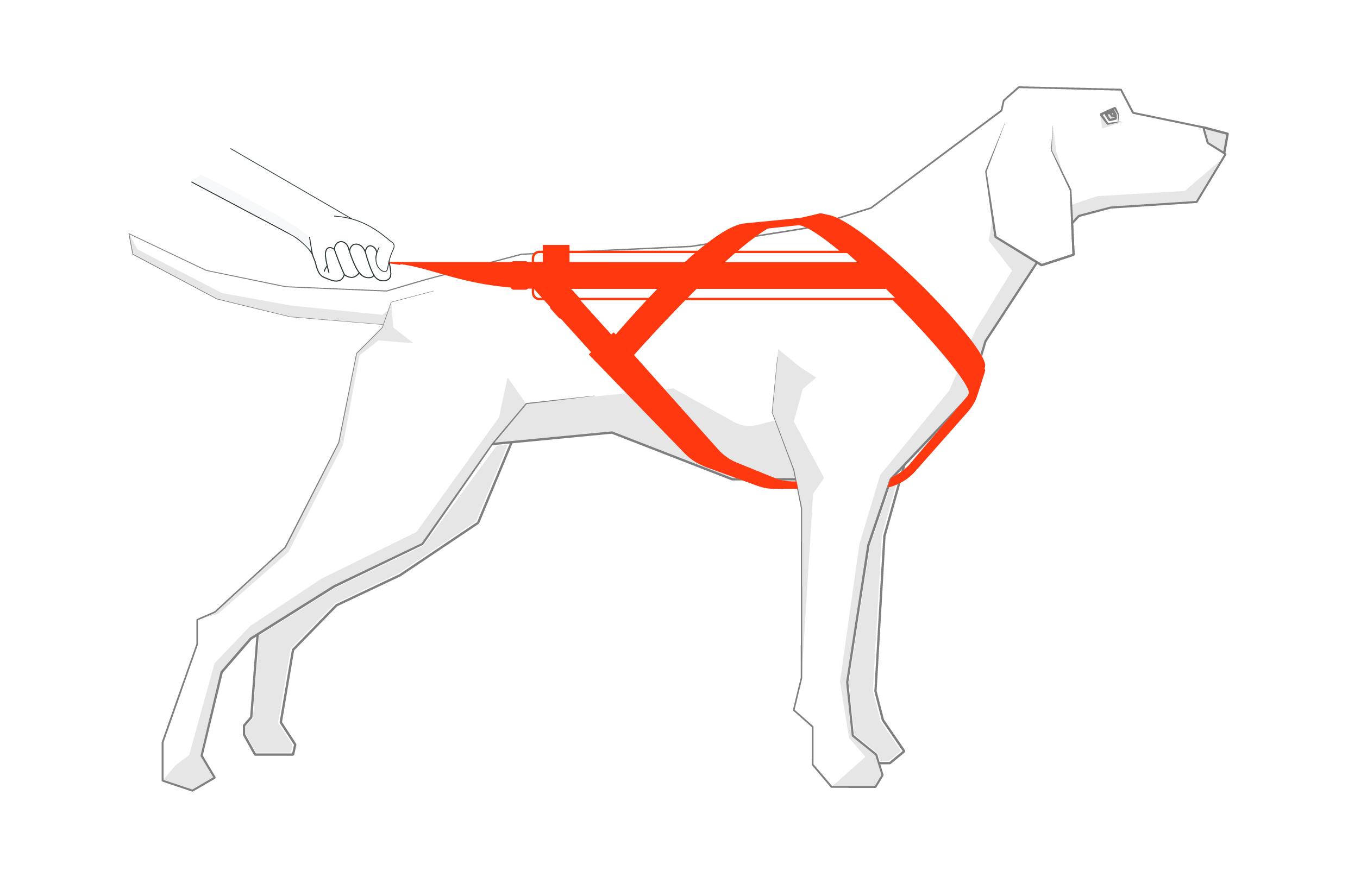 Illustration Measure Dog 02
